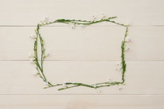 Rectangle flower frame of Asystasia gangetica Royalty Free Stock Photography