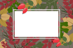 Rectangle frame on autumnal background with leaves and rose hips. Blank rectangle frame on autumnal background with leaves and rose hips - place for your text Royalty Free Stock Photo