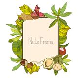 Rectangle frame with nuts and leaves. In color Stock Photography