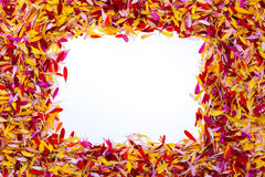 A rectangle inside of petals Royalty Free Stock Photography