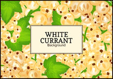 Rectangle label on ripe white currant background. Vector card illustration. White berry fresh and juicy currant for Royalty Free Stock Photos