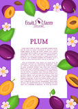Rectangle purple frame and cartoon plum fruit leaves and flower. Vector card illustration. Stock Photos