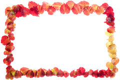 Rectangle of Red and Yellow Leaves Stock Photography