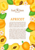 Rectangle yellow frame and cartoon apricot fruit leaves and flower. Vector card illustration Stock Photo