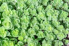 Rectangular arrangement of succulents. Cactus succulents in planter royalty free stock images