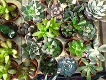 Rectangular arrangement of succulents, cactus succulents in a planter. Rectangular arrangement of succulents, cactus succulents stock image