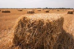 Rectangular bale of hay. Stock Photo