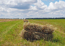 Rectangular bales of hay on the field Royalty Free Stock Images