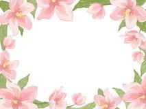 Rectangular border frame pink spring flowers white Stock Photography