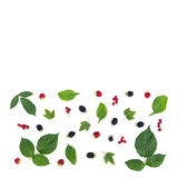 The rectangular composition of a berries and leaves Royalty Free Stock Image