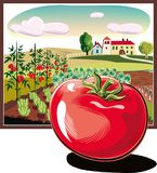Rectangular frame with agricultural landscape, and tomato. Rectangular frame with agricultural landscape, and domato  in foreground Royalty Free Stock Photo