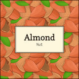 The rectangular frame on almond nut background. Vector card illustration. Nuts , almonds fruit in the shell, whole Stock Photo