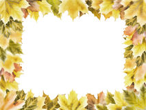 Rectangular frame of autumn maple leaves. Of different colours Royalty Free Stock Photo