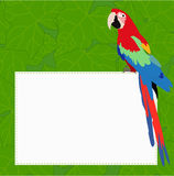 Rectangular frame with a beautiful Ara parrot on a green backgro Royalty Free Stock Photo