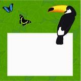 Rectangular frame with a beautiful bird parrot Toucan and butter Stock Images