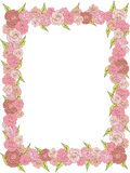 Rectangular frame of delicate roses, wedding. On a white background Royalty Free Stock Photography