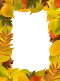 Rectangular frame of different autumn leaves. On white Stock Photos