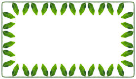 Rectangular frame of a green and succulent leaves peas Stock Images