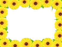 Rectangular frame made of sunflowers around Royalty Free Stock Photo