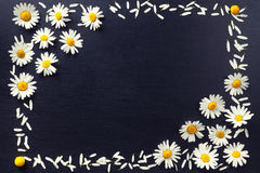 Rectangular frame of white daisies on a black background. Floral pattern with copy space lay flat. Flowers top view. Stock Photos