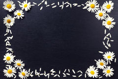Rectangular frame of white daisies on a black background. Floral pattern with copy space lay flat. Flowers top view. Stock Photo