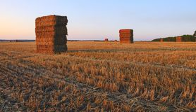 Rectangular haystacks on the empty field after harvesting illuminated by the warm light of setting sun. royalty free stock photo