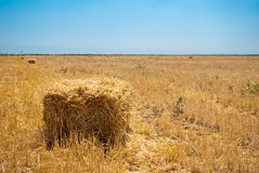 Rectangular haystacks on a field of straw, on a sunny summer day, against a background   of sky and trees Royalty Free Stock Photography