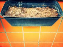 Rectangular pot with compost  Royalty Free Stock Photography