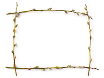 Rectangular pussy willow frame on white Royalty Free Stock Images