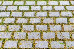 Rectangular stone walkways and grass space between stone in gard Royalty Free Stock Photography