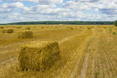 Rectangular straw stack. On a slanted field in the fall Stock Photo