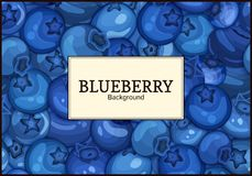 Rectangular white label on ripe blueberry berry background. Vector card illustration. Blue bilberry fresh and juicy Royalty Free Stock Photography