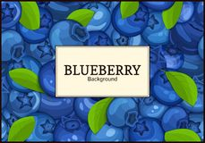 Rectangular white label on ripe blueberry berry and leaves background. Vector card illustration. Blue bilberry beries Royalty Free Stock Images