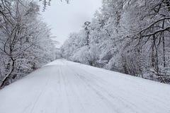 Rectifié par l'hiver 3 Photo libre de droits