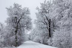 Rectifié par l'hiver 4 Photo libre de droits