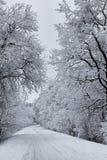 Rectifié par l'hiver 5 Image stock
