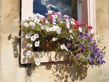 Rectángulo de la flor del jardín de la ventana Imagen de archivo libre de regalías