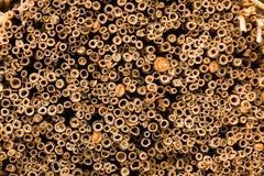 Recubra con caña la textura Fondo amarillo de la caña o de la paja Fotografía de archivo libre de regalías