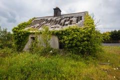 Recubrimiento abandonado de las raíces de las enredaderas de la casa Imagenes de archivo