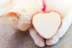 Recue o gato branco com caixa do coração, gatos do amor Fotografia de Stock