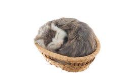 Recuerdo del gato en cesta de mimbre Fotos de archivo libres de regalías