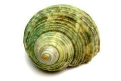 Recuerdo del mar una concha de berberecho Imagenes de archivo