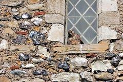 RECULVER, KENT/UK - 12 DECEMBER: Bevroren Torenvalk die beschutten van Royalty-vrije Stock Afbeelding
