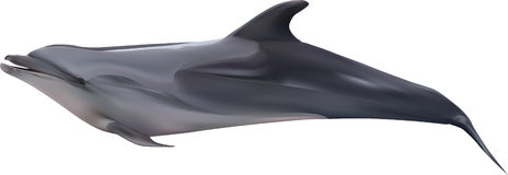 Recumbent dolphin illustration on white Royalty Free Stock Photo