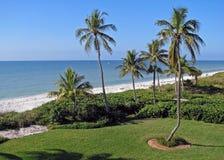 Recuo tropical Imagens de Stock Royalty Free