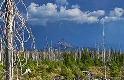 Recuperación del incendio forestal Imagenes de archivo
