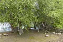 Recurring water overflowing wild nature protection zone of the R. Hine in Germany at Ingelheim on the Rhine district Jung Aue Stock Image