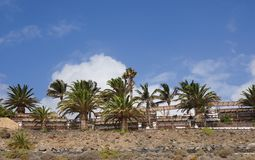 Recurso árvore-alinhado palma Fotos de Stock