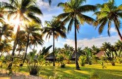Recurso da palmeira imagens de stock