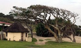 Recurso de Transkei Fotografia de Stock